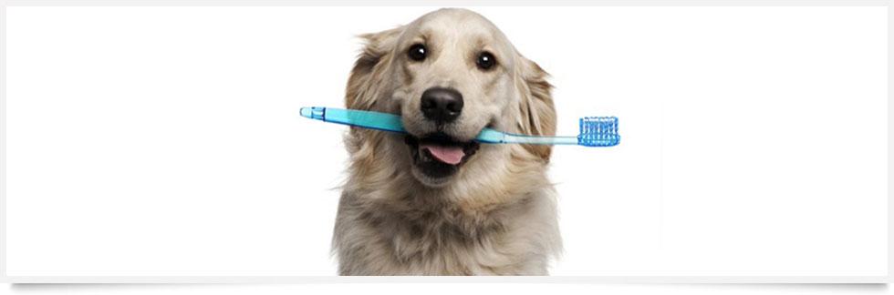cerchi un veterinario dentista